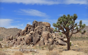Typical landscape of Joshua Tree National Park