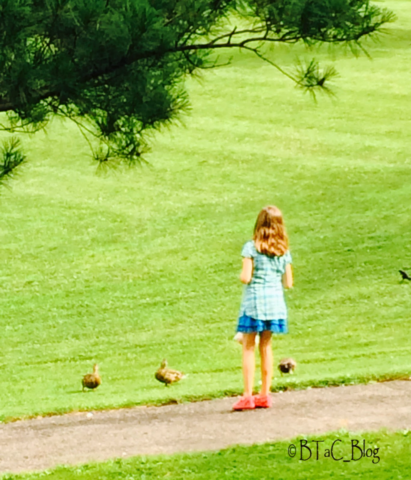 Girl feeding ducks.
