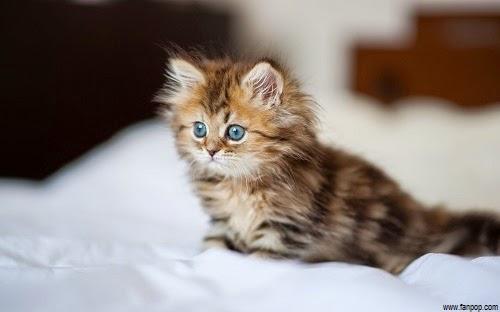 Une Photos de chatons, bébés chat