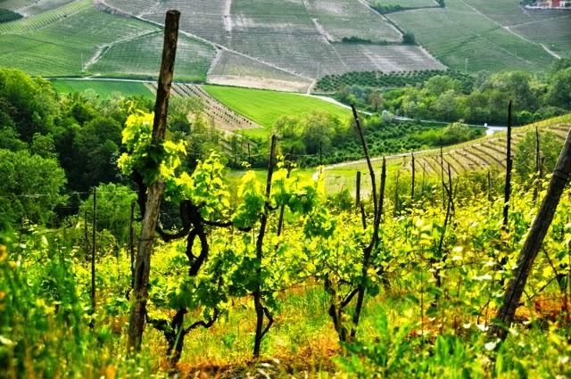 Piedmont Region Wine Amphitheater Italy