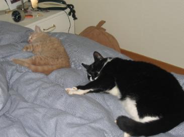 klarting i tre katt