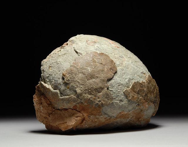 Prehistoric Fossilized Dinosaur Egg Hadrosaur Fossil