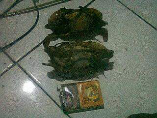 cara mancing kepiting