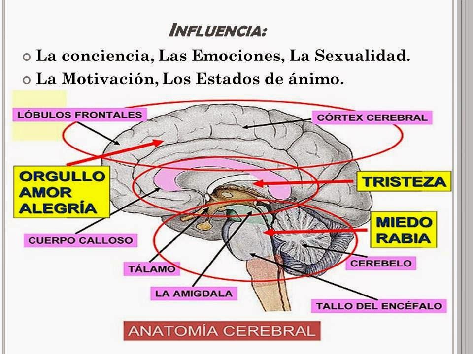 TEMAS DE PSICOLOGÍA : Estructuras Orgánicas y su influencia en la ...