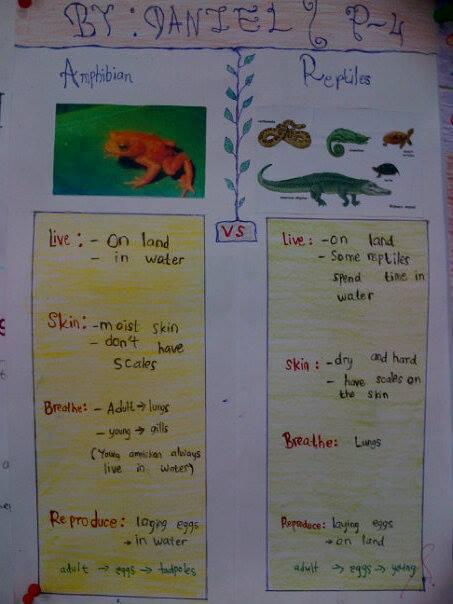 Amphibians Journal Our Fantastic J...