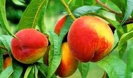 Nos Fruits=Notre Santé