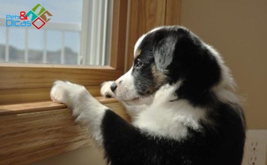Cachorro sozihno olhando a janela