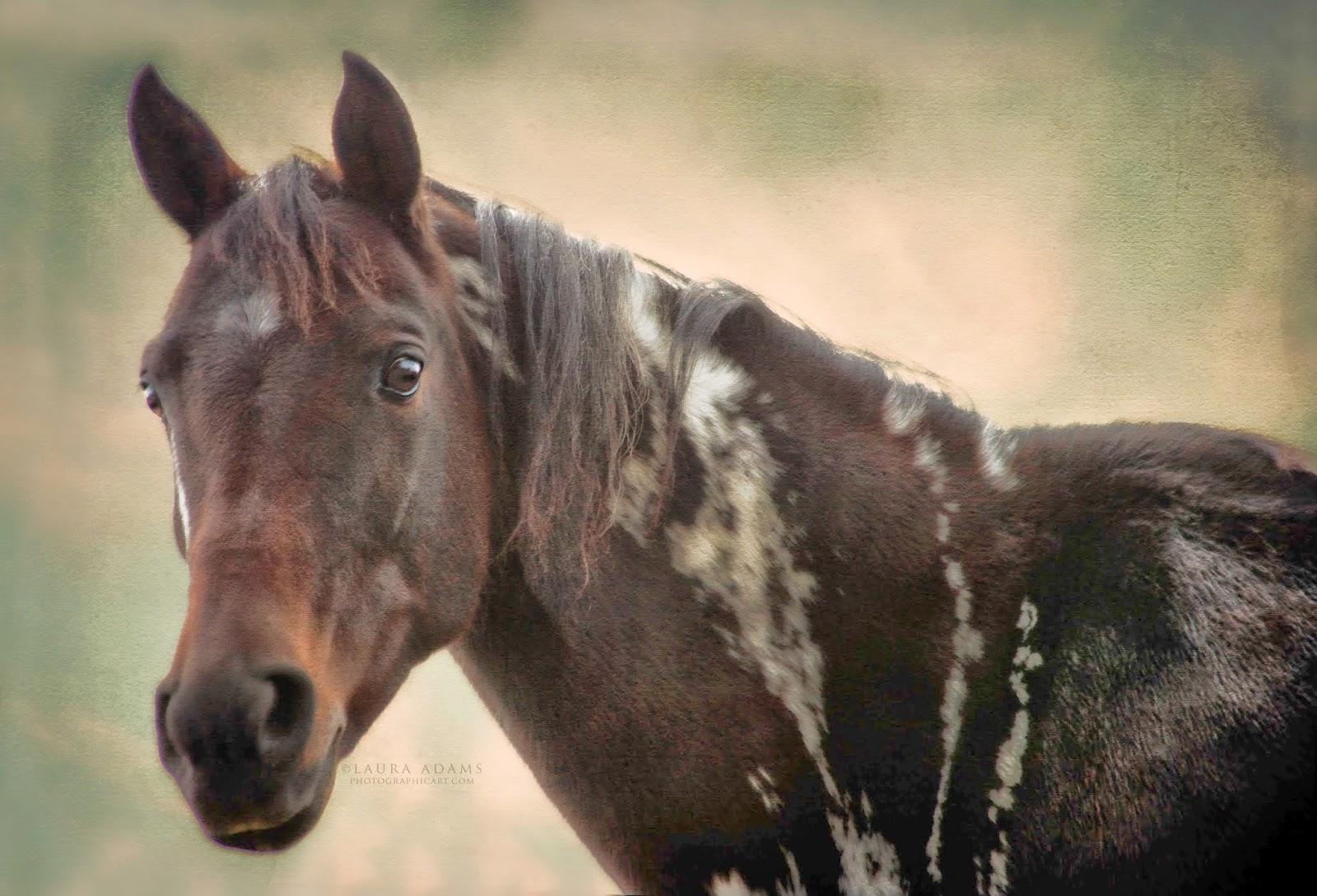 Laura Adams   Michigan Equine and Portrait Photographer ...