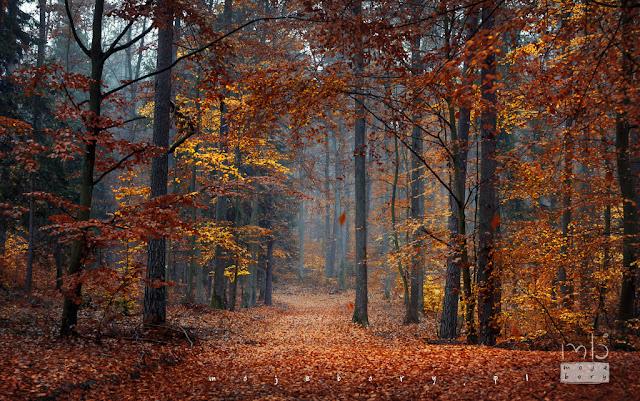 las jesienią w borach tucholskich