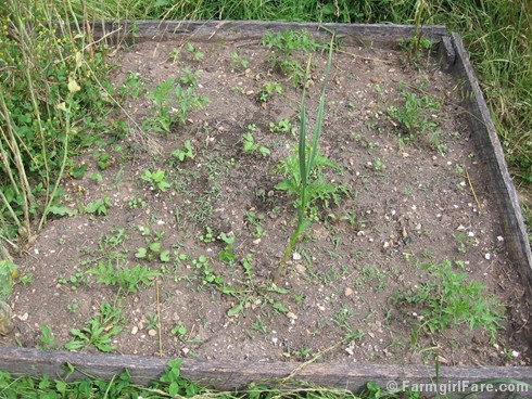 how to use a scuffle hoe to weed the vegetable garden and why i love mine so much - Garden Weeds