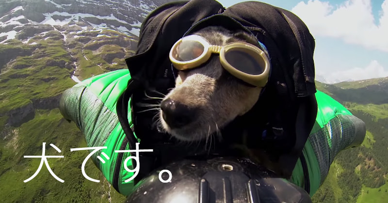 世界初!?ムササビスーツを着て一緒に高い山から飛び降りる犬
