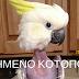 Παπαγάλος ...μαδημένο κοτόπουλο από το άγχος!