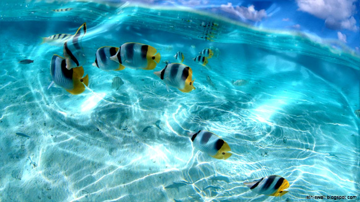 Watery Live Wallpaper pc