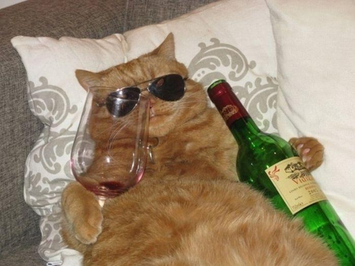 Um gato alcólatra