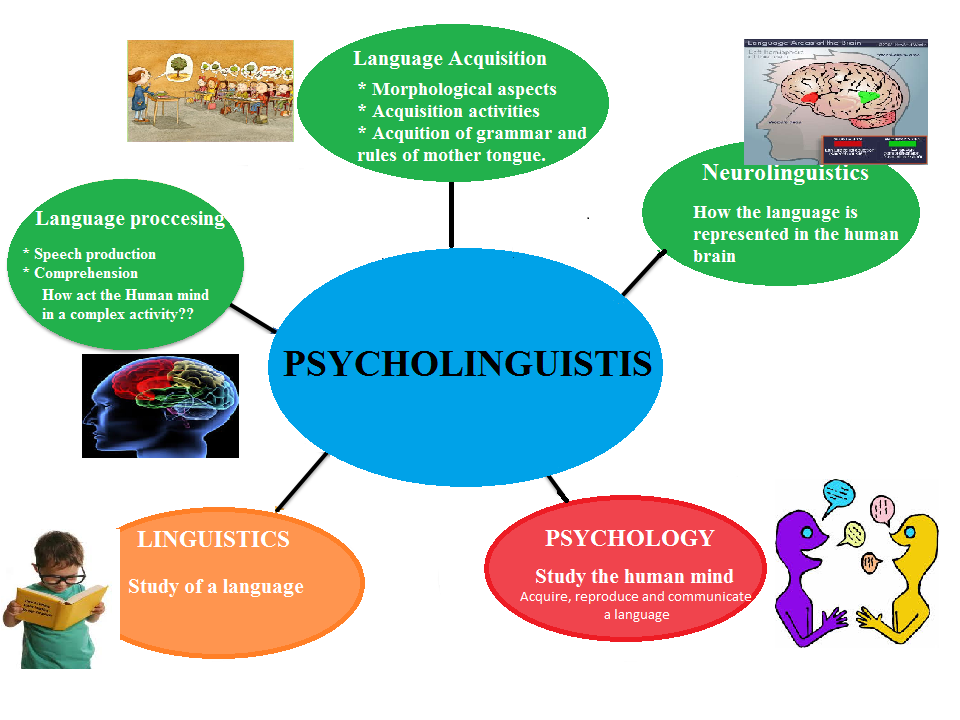 psycholinguistic linguistics and language essay Essays on psycholinguistics - bigpaperscom essays on psycholinguistics and psycholinguistics term papers: language and linguistics offer good research paper.