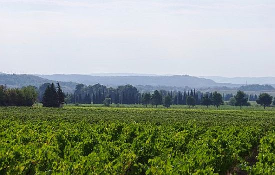Massamier La Mignarde Vineyard