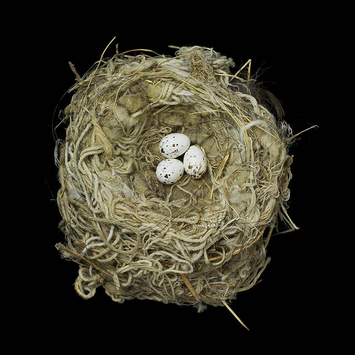 ... ) Awesome Photography of Birds Nests | Pictures | Photos | Images