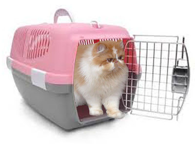 Tips membantu kucing agar cepat beradaptasi dengan rumah baru