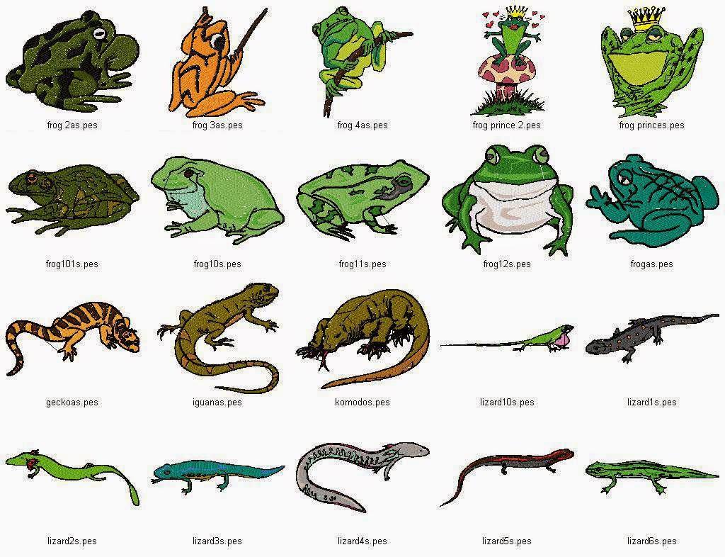 Q Son Los Reptiles Tipos de animales: 201...