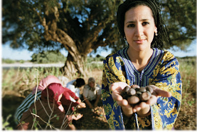 donna berbera durante la raccolta dei frutti di Argan in Marocco