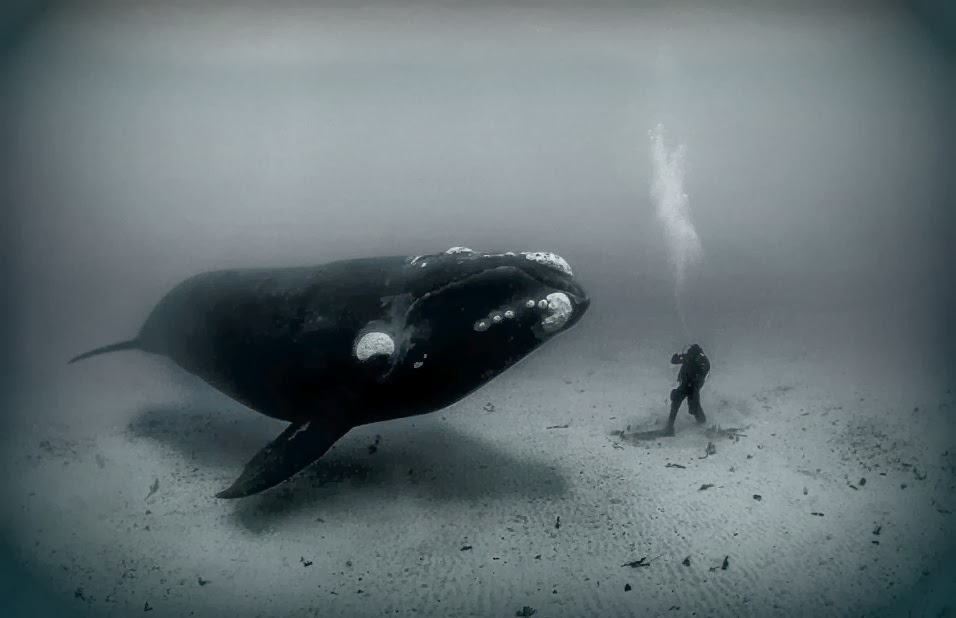 гренландский кит, самое долгоживущее существо на Земле
