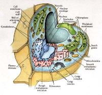 Struktur Sel Tumbuhan