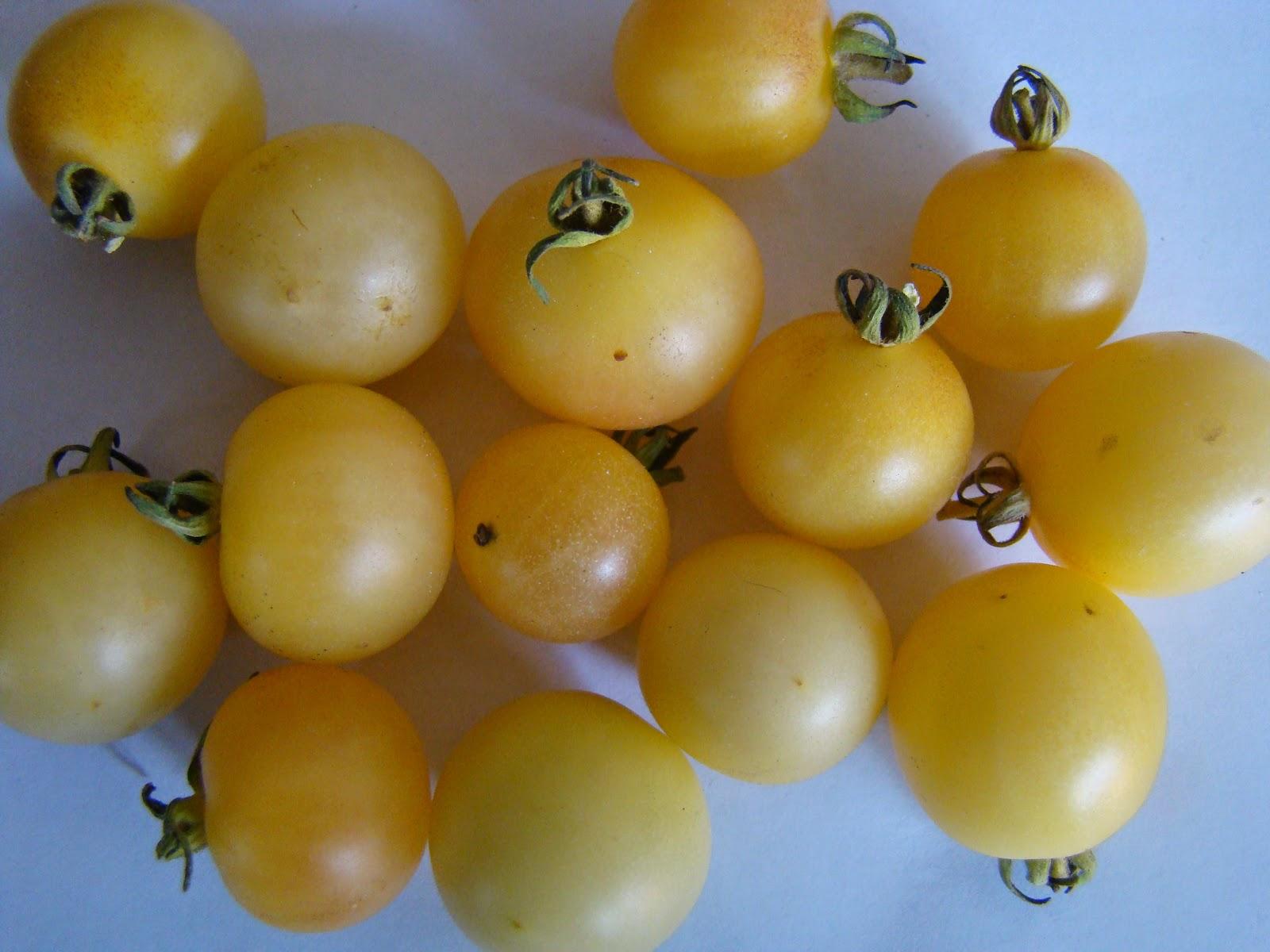 tomate mirabelle blanche troc aux plantes