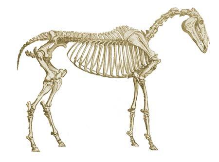 October 2012 - veterinary online