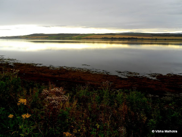 On the second day of our coach trip we started with two brief picture stops near Inverness. Both were on the Moray Firth, the second one on Dornoch Firth that cuts further inland from Moray Firth. Many rivers culminate into these firths and the result of the union is a great diversity of landscapes and life.  Our kilted tour guide, Ross, was an avid photographer and very passionate naturalist. I think such people make perfect tour guides because their passion rubs off on the tourists.This is the great Moray Firth which is home to seals and dolphins. We did see a snout or two jut out of water at a distance. Rivers such as Ness, Findhorn, and Spey drain into the firth. On clearer days, it seems many of these seals are out on the bay simply lazing around. But because the weather was mirky, the bay was all but abandoned.The colourful flora around the waters and the brilliant light that cast spectacular reflections in the water still made it worth it for us to stop and spend a few minutes.This was the second stop.The River Oykel that drains into Dornoch Firth which is a smaller Firth cutting in from the Moray Forth. The River Oykel is the migration path of the North Atlantic Salmon that swims up the river to reach its preferred spawning site in the fresh water. Here is the River Oykel with green and purple banks. The purple colour is mostly because of heather, a plant that grows in the bogs and is the main source of the fuel, peat.Beautiful pink flowers! I haven't yet been able to find out their name. I will update the post once I do. But these add a lot of colour and character to the landscape. They grow in wild abandon, undisturbed by human intervention.Right next to the River Oykel is Struie Hill, which is the vantage point from where we took a couple of photos and headed to our next stop of the trip. I will soon write about it.