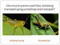 Cara Sederhana Mengajarkan Konsep Seleksi Alam