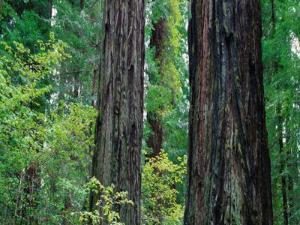 Sebuah Pohon Ternyata Dapat Berbicara