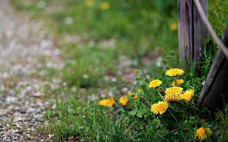 Spring Underfoot
