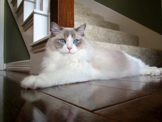 Участница фестиваля - кошка Грэйси