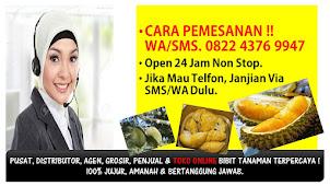 Jual Bibit Durian Musang King