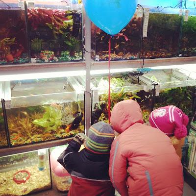рыбы в аквариуме зоомагазин