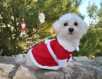 Dog christmas dress patterns