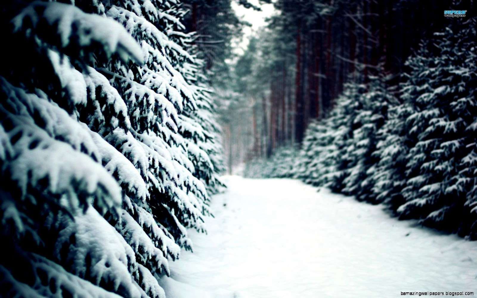 Snowy Forest Wallpaper   WallpaperSafari