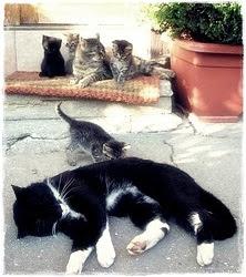 Tomýková a její potomstvo :-)