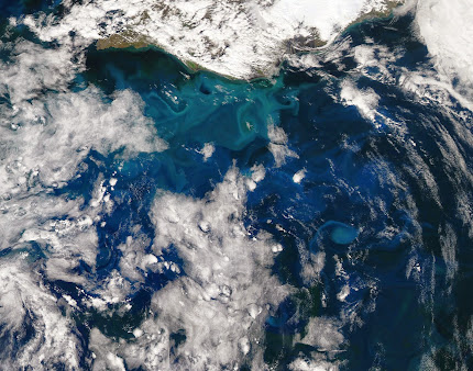 SPRING SATELLITE VIEW OF PHYTOPLANKTON IN BLOOM