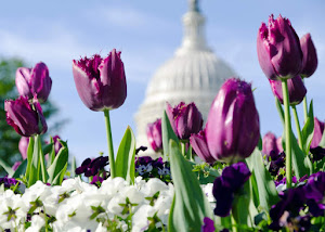 U.S. Citizenship Resources for April: Passover, Easter, Ramadan, and more!