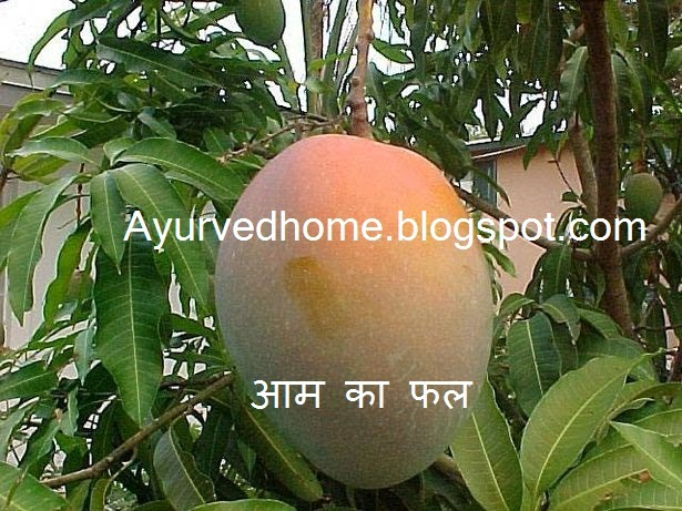 Different Use of Mango Fruit and Tree  आम के फल के फायदे