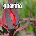 clik to gparthacargo