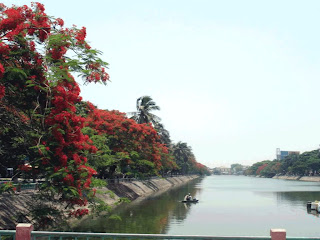 Riverside of Hai Phong with red flowers Flamboyan