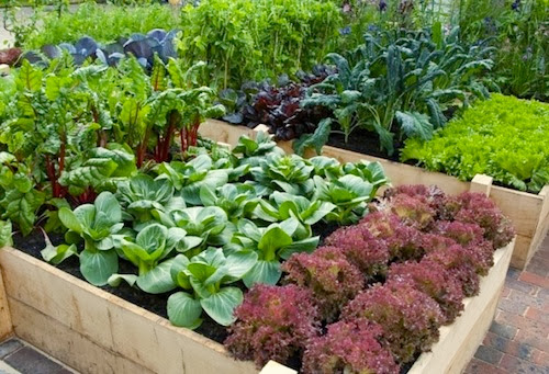 Vegetable garden design ideas for backyard backyard for Veggie garden designs