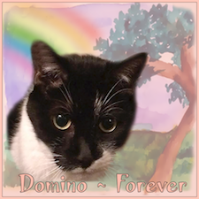 Our Angel Domino