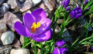 Bunga Cantik Yang Bisa Sembuhkan Kanker Dengan Sekali Makan