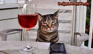 kucing ngantuk mabuk wine
