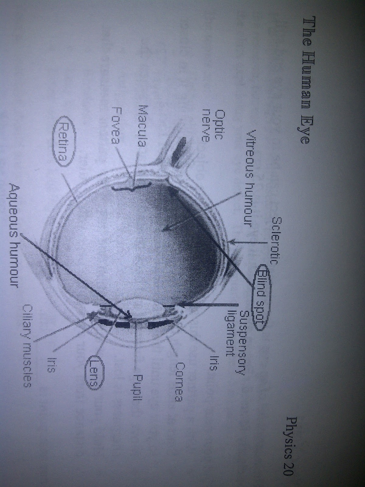 Geus lieur human eye diagram human eye diagram ccuart Gallery