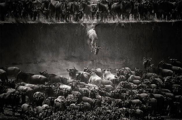 animal migration photos-3