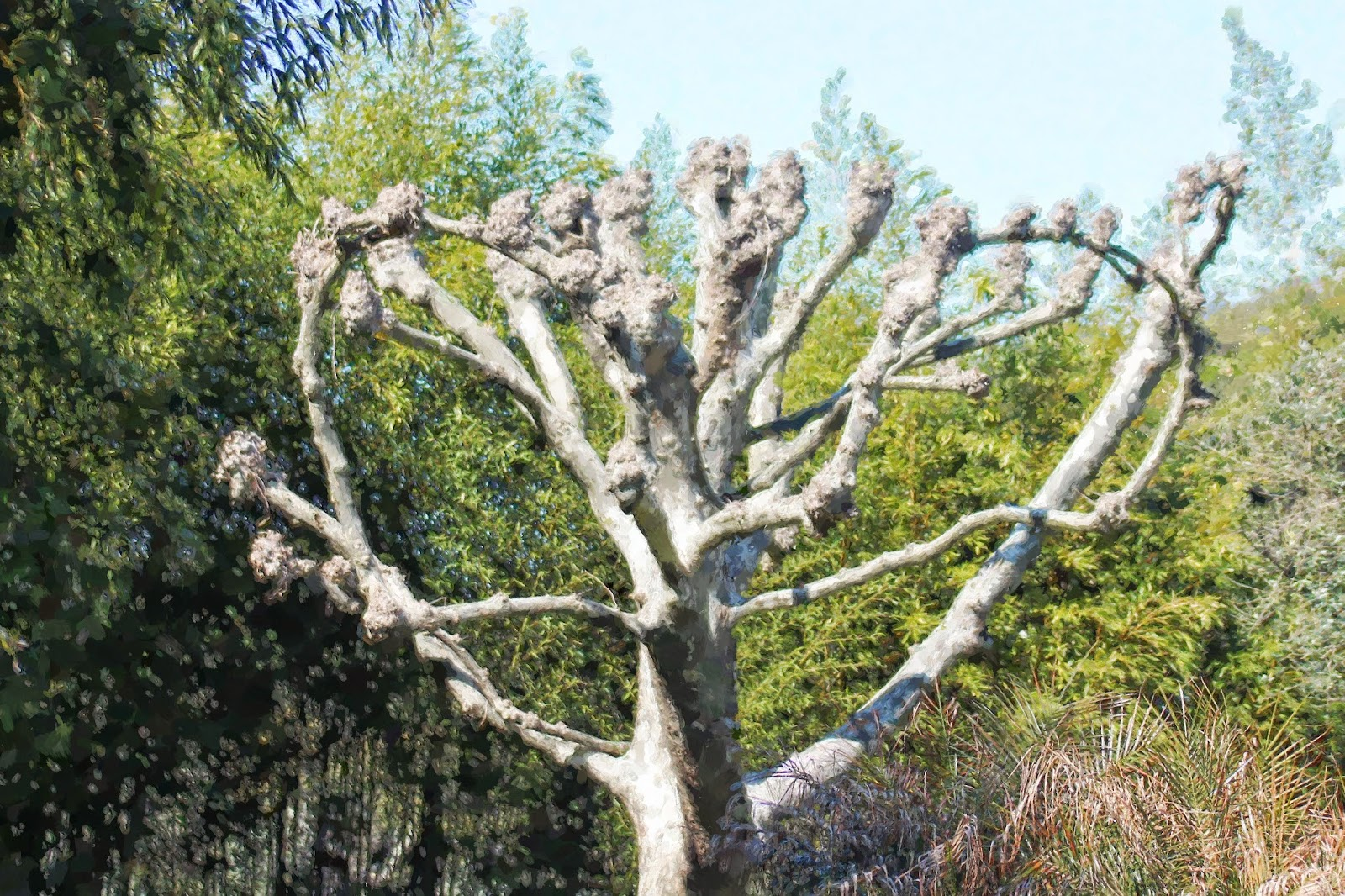 FotoSketcher pintura 10- pinceladas- Arvore exótica